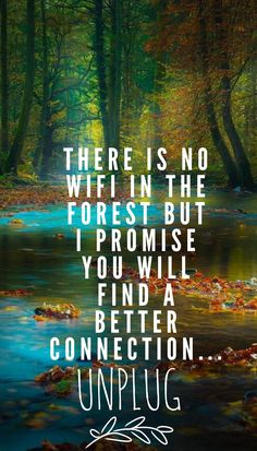 There is no wifi in the forest but i promise you will find a better connection