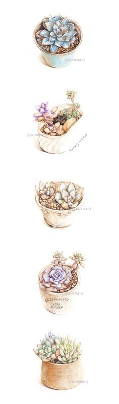 succulents by SUNRISE-J