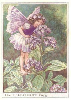 http://www.wellandantiquemaps.co.uk/lg_images/The-Heliotrope-Fairy.jpg