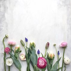 © Cristina Colli  ranunculus muscari tulips