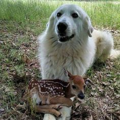 dogdeer5puppy_and_dogpics