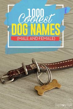 1000 Coolest Dog Names (and how to name your pup) - Naming Fido - 1000 Most Cool Dog Names (male + female) - Cool Dog Names Male, Puppies Names Female, Funny Dog Names, Female Names, Pet Names For Dogs, Boy Puppy Names, Yorkie Names, Cute Puppy Breeds, Cute Little Puppies