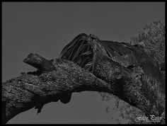 Tronco roto - B&N M6110130_HDR