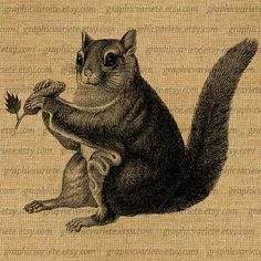 Squirrel Animal Forest Woodland Digital Collage Sheet Download Image Burlap Fabric Transfer Iron On Pillows Totes Tea Towels 1092