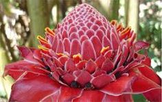 plants of the rainforest - Google Search