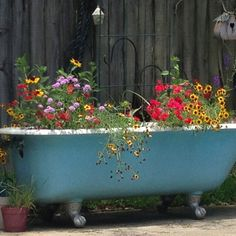 My cast iron claw foot bathtub used as a planter by my pool in the backyard.