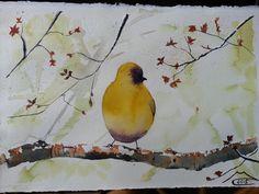 Uccellino  20 febbraio 2015