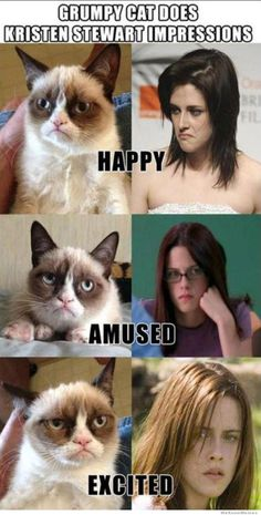 Grumpy Cat does Kristen Stewart Impressions!!!! Lolololol<3<3<3<3