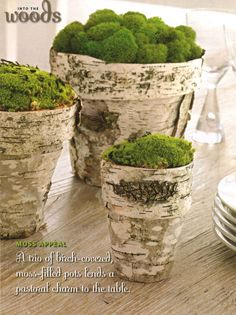 terry cotta pots trimed with birch bark and clumps of real moss
