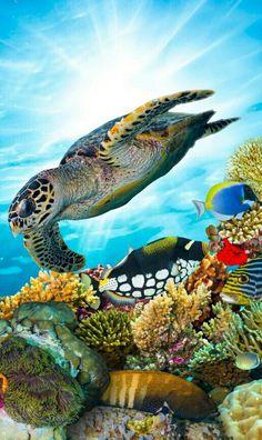 Nature Pictures, Beautiful Pictures, Turtle Habitat, Ocean Life, Beautiful Roses, Under The Sea, Pet Birds, Habitats, Amazing Photography