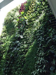 Jardin vertical muro verde