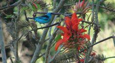 Plantas no jardim para alimentar os pássaros - Plants in the garden to feed the birds