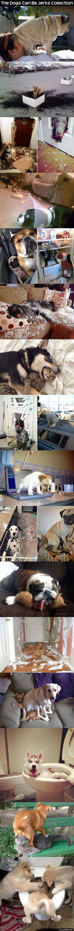 Funny dogs in trouble hilarious ideas Funny Pictures Tumblr, Funny Cat Photos, Super Funny Pictures, Funny Animal Pictures, Cute Funny Animals, Funny Cute, Funny Babies, Funny Dogs, Teach Dog Tricks