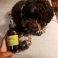 Lumps Be Gone fatty mass dog warts lumps bumps natural | Etsy Dog Warts, Anti Inflammatory Oils, Tartar Removal, Dog Toothpaste, Lavender Benefits, Dog Weight, Brown Bodies, Grapefruit Essential Oil, Frankincense Essential Oil