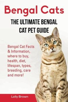 Bengal Cats: Bengal Cat Facts & Information, where to buy, health, diet, lifespan, types, breeding, care and more! The Ultimate Bengal Cat Pet Guide * Learn more by visiting the image link.