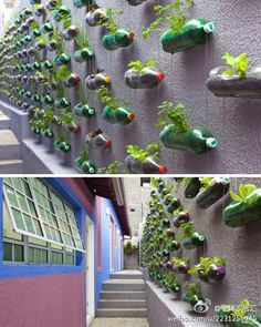 If you have a lot of plastic bottles at home, you can reuse them for best usages. Reusing plastic bottles can save a lot of space and be of immense help. Plastic Drink Bottles, Plastic Bottle Crafts, Soda Bottles, Water Bottles, Magic Garden, Herb Garden, Planter Garden, Planter Ideas, Bottle Wall