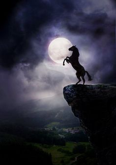 Wild Rearing Mustang High on a Rock With Moonlight.