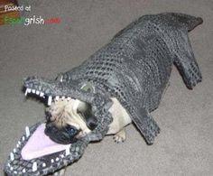 pug costume | Funny-Pet-Costumes-Pug-In-Alligator-Costume