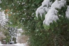 Winter is beautiful ❄️ Gallery, Winter, Happy, Flowers, Plants, Beautiful, Winter Time, Roof Rack, Ser Feliz