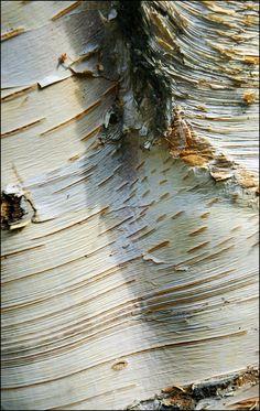 George Rex photography  |  Silver Birch bark, 2010  | Hyde Park, London, England