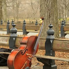Double Bass in Central Park