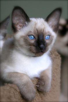 Free Kittens Charlotte Nc