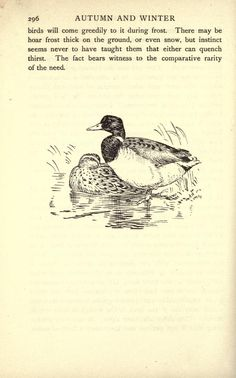 The English year. Illustration: ducks, pg. 296.