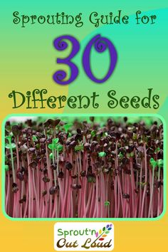 Sprouting Seed Guide ~ Sprout'n Out Loud Sprouting Seed Guide Sprouting Seeds, Growing Sprouts, Growing Microgreens, Starting A Vegetable Garden, Veg Garden, Homestead Survival, Survival Kit, How To Make Sprouts, Salads