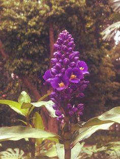 Flor no jardim do museu imperial