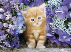 Puzzle 500 Teile Kätzchen im Blumenmeer Clementoni 30415 in Spielzeug, Puzzles & Geduldspiele, Puzzles | eBay