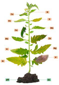 Agro-Bio richtingen: Gebreksverschijnselen in de plant