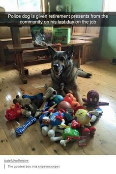 What do they do with police dogs like this. Do police officers get to keep them? Always wondered about working dogs like this. Love My Dog, Cute Funny Animals, Funny Dogs, Cute Dogs, Funny Memes, Animals And Pets, Baby Animals, Police Dogs, Police Police