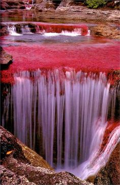 ✯ The River of Five Colors - Cano Cristales, Colombia