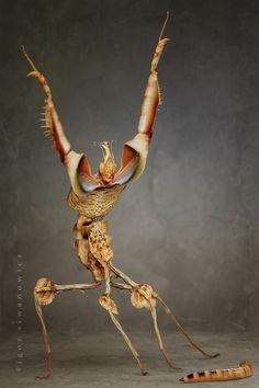 Fabulous mantis xD