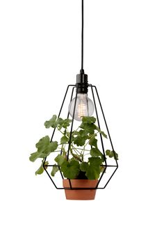 Jotex Sevilla lamp w pot Bonsai Plants, Diy Planters, Balcony Garden, Plant Hanger, Pendant Lighting, Ceiling Lights, Interior, Green, Design
