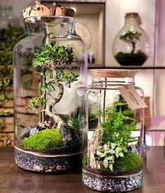 NanoGarden e Bonsai 🌿 In foto Terrarium Diy, Bottle Terrarium, Terrarium Centerpiece, How To Make Terrariums, Bottle Garden, Hanging Terrarium, Succulent Gardening, Succulents Garden, Best Indoor Plants