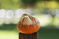 Pic: Decorative pumpkin