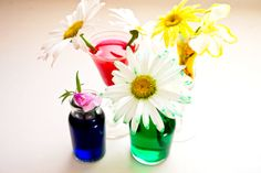 fun summer science projects for kids