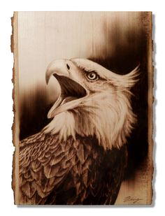 Pyrography, Wood Burning Eagle Bust. Original.