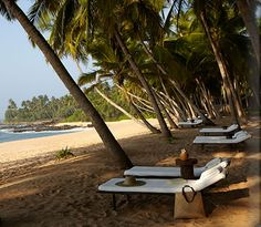 Golden sand beach in an 800m crescent-shaped cove, fringed with palm trees - Amanwella, Tangalle, Sri Lanka