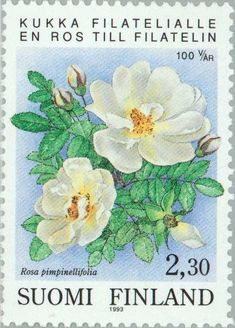 Stamp: Burnet Rose (Rosa pimpinellifolia) (Finland) Years Organized Philately in Finland) Mi:FI 1198 Postage Stamp Design, Postage Stamps, Going Postal, Flower Stamp, Butterfly Flowers, Vintage Ephemera, Stamp Collecting, Doodle Art, Vintage Decor
