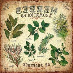cocina plantas aromaticas                                                                                                                                                     Más