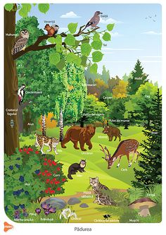 Easy Animal Drawings, Easy Animals, Home Schooling, Animals Beautiful, Aquarium, Education, Children, Poster, Painting