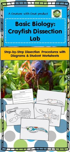 Crayfish dissection-step by step with labeled images to guide the ...