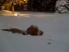 Basset snow plow