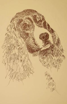 English Springer Spaniel: Dog Art Portrait by Kline - art drawn entirely from the words English Springer Spaniel. drawdogs.com : drawdogs.com http://drawdogs.com/product/dog-art/english-springer-spaniel-dog-portrait-by-stephen-kline/ His collectors number in the thousands from over 20 countries and every state in the US. Kline's dog art has generated tens of thousands of dollars for dog rescues worldwide.