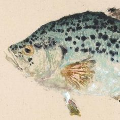 """Limited Edition Print    Title: Crappie - Speckled Perch  Size: 17.5"""" x 10""""    Beautifully detailed print of original Speckled Perch fish rubbing."""