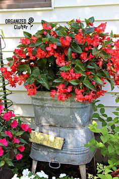 Galvanized Laundry Tubs in the Junk Garden Garden Junk, Garden Soil, Flower Gardening, Sun Garden, Garden Tips, Container Gardening Vegetables, Container Plants, Plastic Hanging Baskets, Home Vegetable Garden