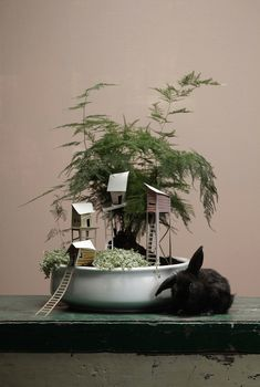 asparagus fern and tiny forts