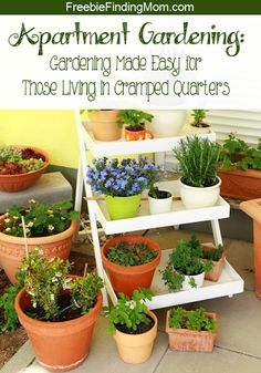 Apartment Gardening- Even with limited space you can enjoy a bounty of delicious fruits, vegetables and herbs.